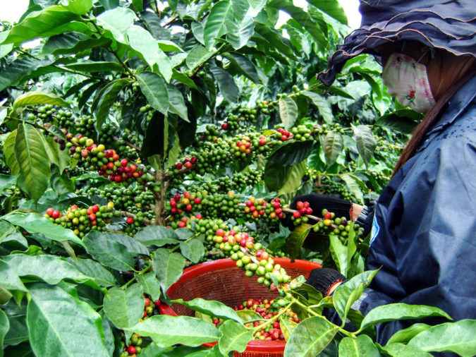 Vietnam.-675x506 Top 10 Coffee Producing Countries in the World