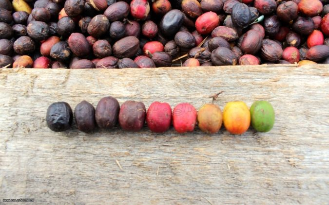 coffee..-675x422 Top 10 Coffee Producing Countries in the World