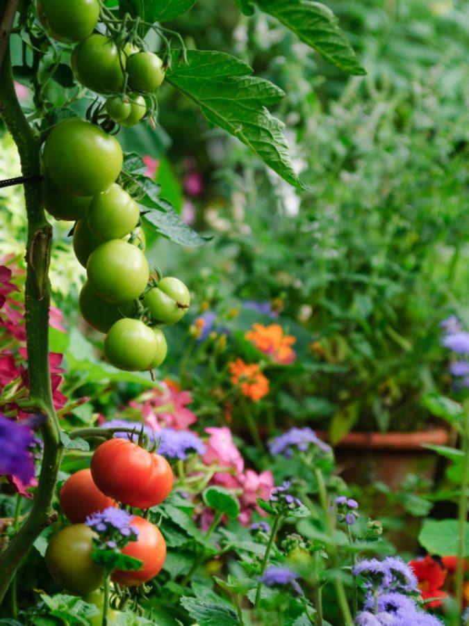 home-garden-675x900 Top 20 Garden Trends: Early Predictions to Adopt