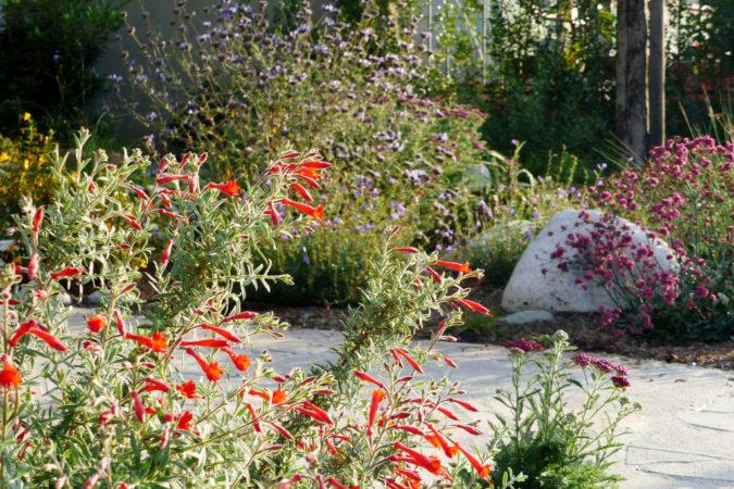 home-garden-Native-Plants-675x450 Top 20 Garden Trends: Early Predictions to Adopt