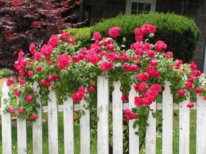 home-garden-fense-675x506 Top 20 Garden Trends: Early Predictions to Adopt
