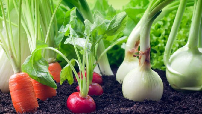 home-garden-fruits-and-vegetables-675x380 Top 20 Garden Trends: Early Predictions to Adopt