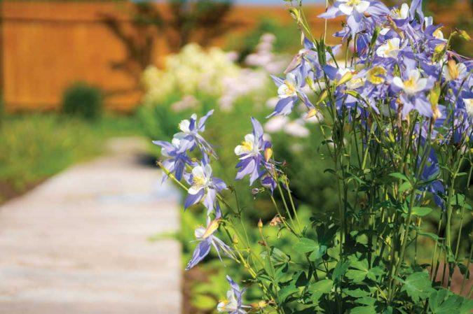 home-garden-native-plants-2-675x449 Top 20 Garden Trends: Early Predictions to Adopt