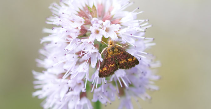 wildlife-home-garden-675x349 Top 20 Garden Trends: Early Predictions to Adopt