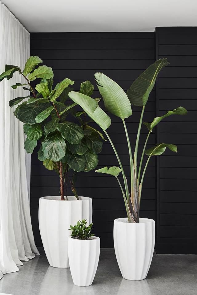 home-natural-plants-3 10 Ways to Keep Your Home Smelling Clean and Fresh