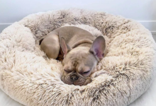 Photo of 6 Anxiety Relief Routines at Your Dog's Bedtime