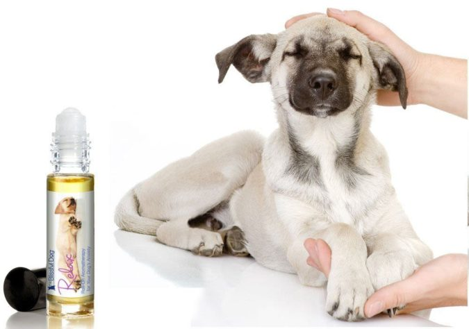 Calming-scents-675x474 6 Anxiety Relief Routines at Your Dog's Bedtime