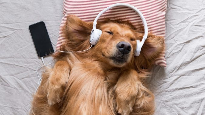 Music-therapy-for-dogs-675x379 6 Anxiety Relief Routines at Your Dog's Bedtime