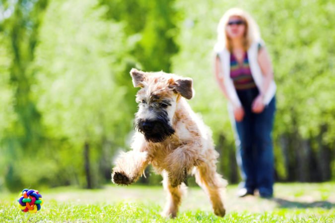 dog-exercise-675x450 6 Anxiety Relief Routines at Your Dog's Bedtime