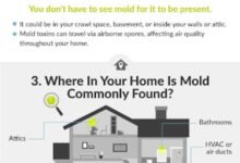 Photo of Why You Need to Prevent Mold at Your Home