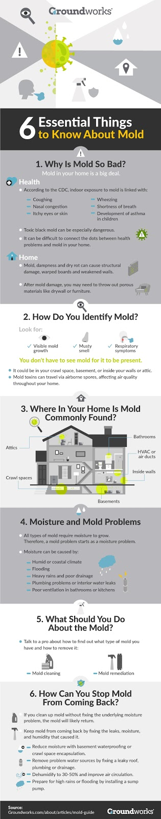 mold-guide-infographic-groundworks Why You Need to Prevent Mold at Your Home