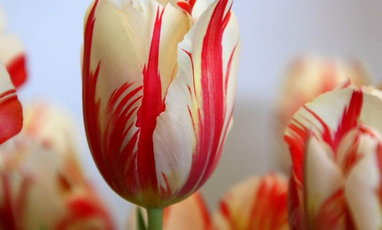 Photo of Top 10 Most Expensive Flowers in The World