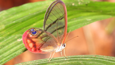 Photo of Top 10 Most Beautiful Colorful Butterflies Species