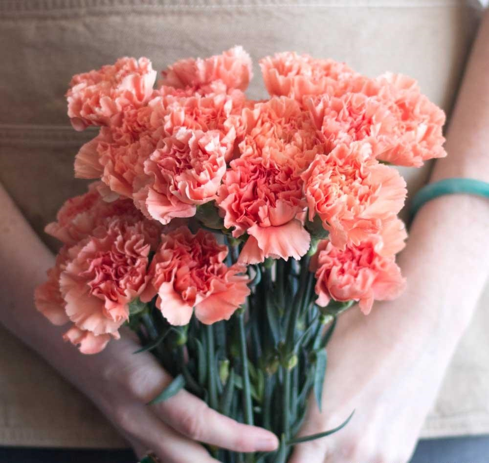 Carnations-2 Best 30 Bright Colorful Flowers for Your Garden