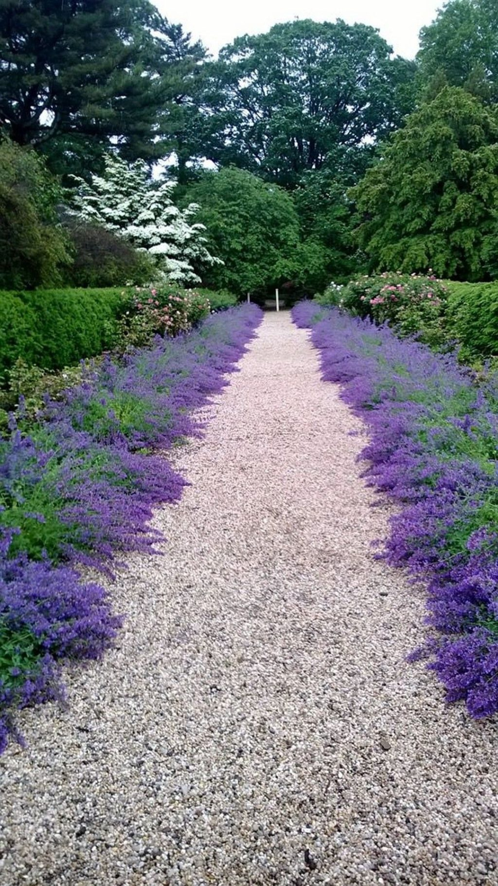 Catmint-'Walkers-Low.-1024x1820 Top 10 Flowers that Bloom All Summer