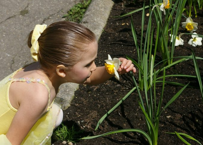 Daffodil-1-675x481 Best 30 Bright Colorful Flowers for Your Garden