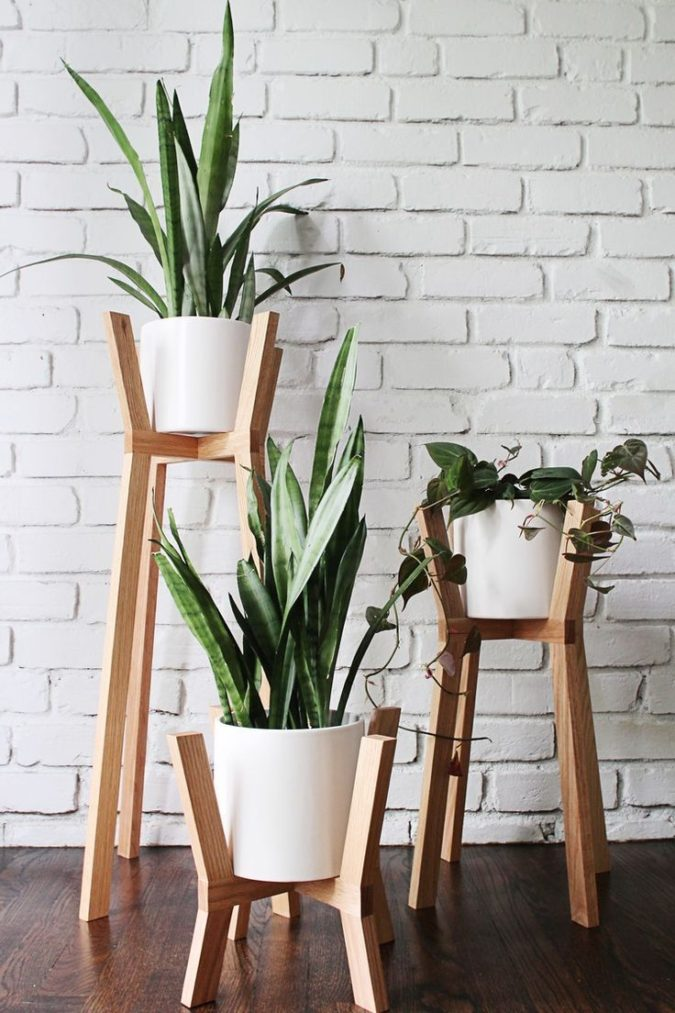 Houseplants-675x1013 Why Houseplants Are This Year's Best Birthday Gifts