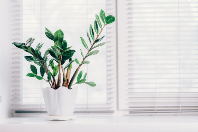Houseplants-8-675x450 Why Houseplants Are This Year's Best Birthday Gifts