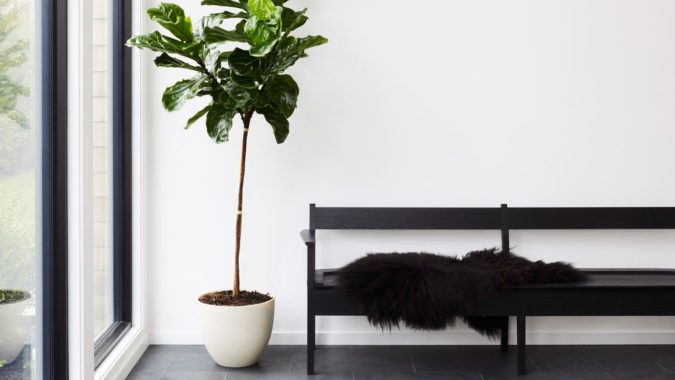 Houseplants-home-decor-2-675x380 Why Houseplants Are This Year's Best Birthday Gifts