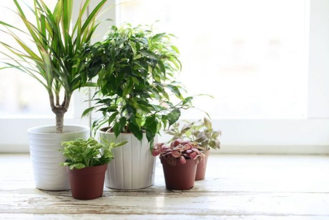 Houseplants-home-decor-5-675x451 Why Houseplants Are This Year's Best Birthday Gifts