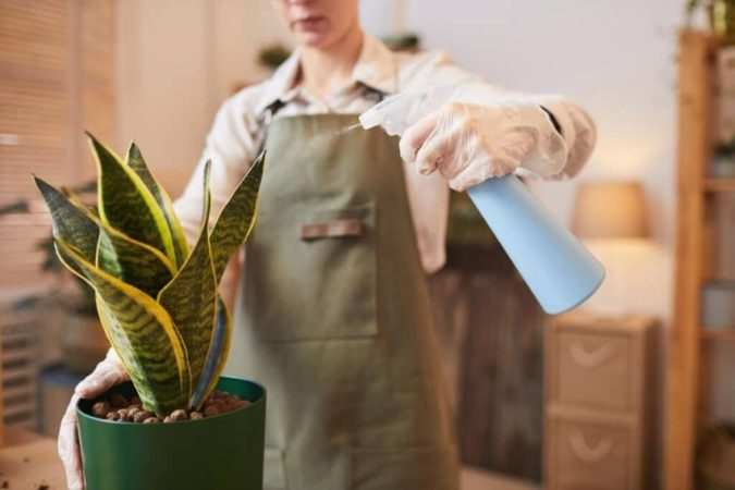 Houseplants-home-decor-7-675x450 Why Houseplants Are This Year's Best Birthday Gifts
