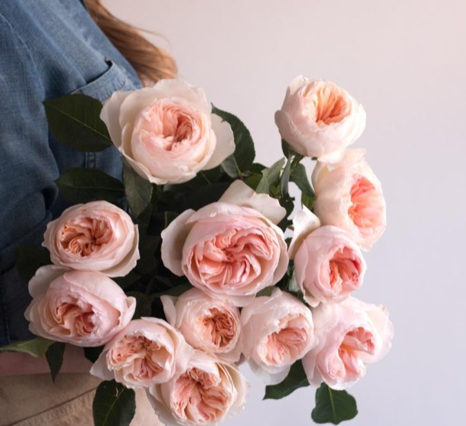 Juliet-Rose.-675x616 Top 10 Most Expensive Flowers in The World