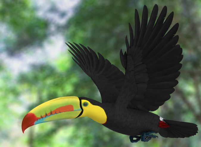 Keel-billed-toucan-1-675x496 Top 20 Most Beautiful Colorful Birds in The World