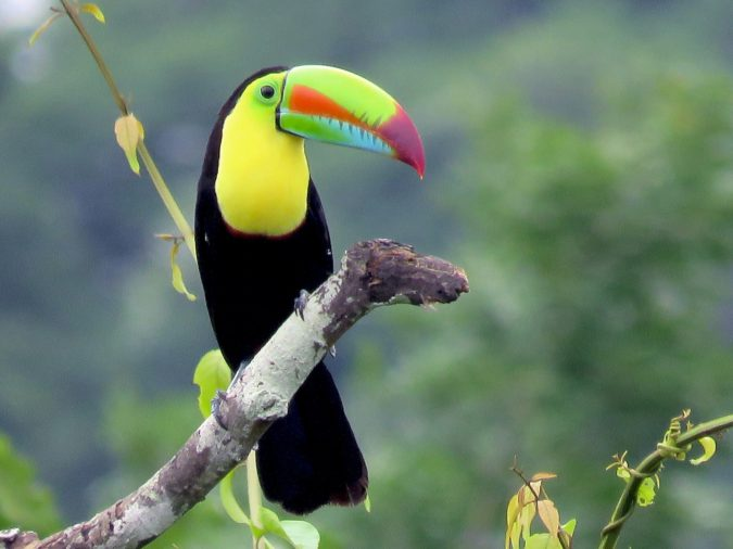 Keel-billed-toucan-675x506 Top 20 Most Beautiful Colorful Birds in The World