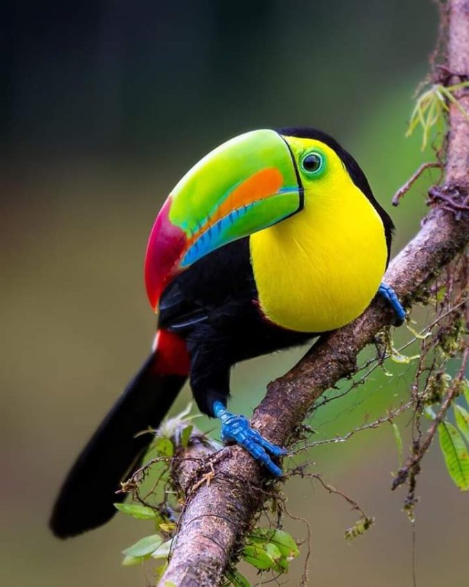 Keel-billed-toucan.-675x844 Top 20 Most Beautiful Colorful Birds in The World