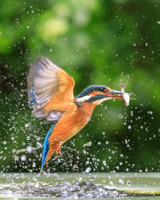 Kingfisher-1-675x844 Top 20 Most Beautiful Colorful Birds in The World