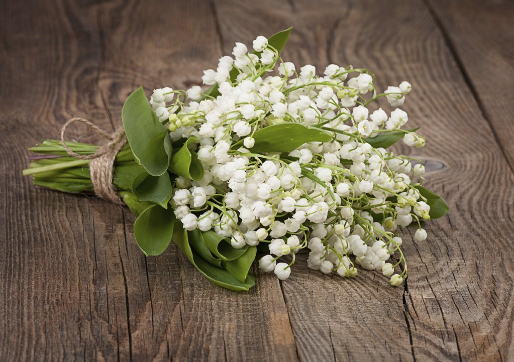 Lily-of-the-valley-1 Top 10 Most Expensive Flowers in The World