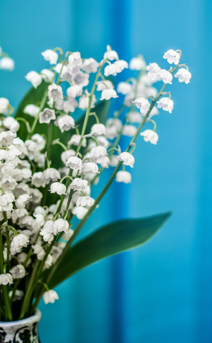 Lily-of-the-valley..-e1598005243652-675x1092 Top 10 Most Expensive Flowers in The World