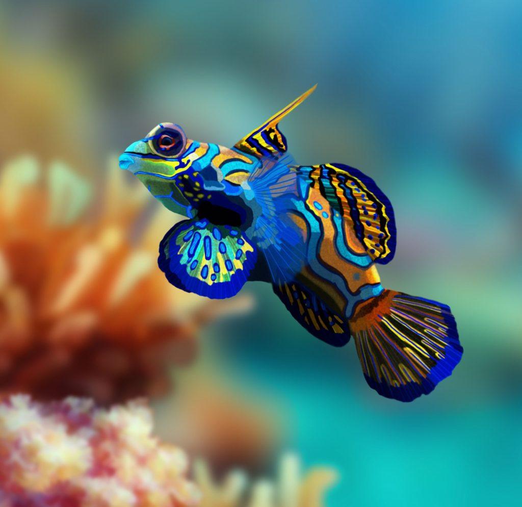 Mandarinfish.-1-e1597423822746-1024x994 Top 10 Most Beautiful Colorful Fish Types