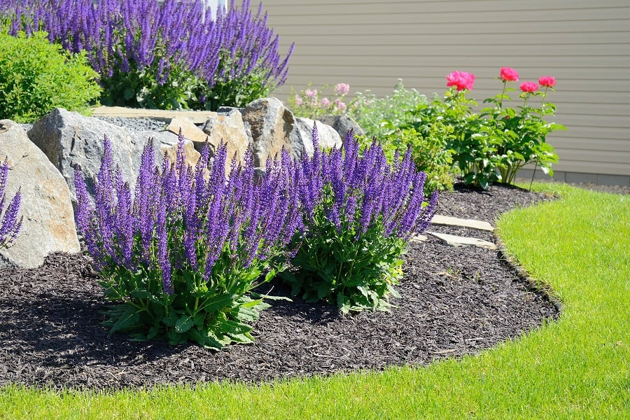 May-Night-Sage.-1 Best 30 Bright Colorful Flowers for Your Garden