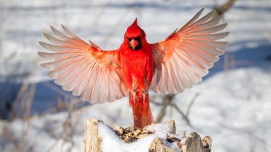 Photo of Top 20 Most Beautiful Colorful Birds in The World