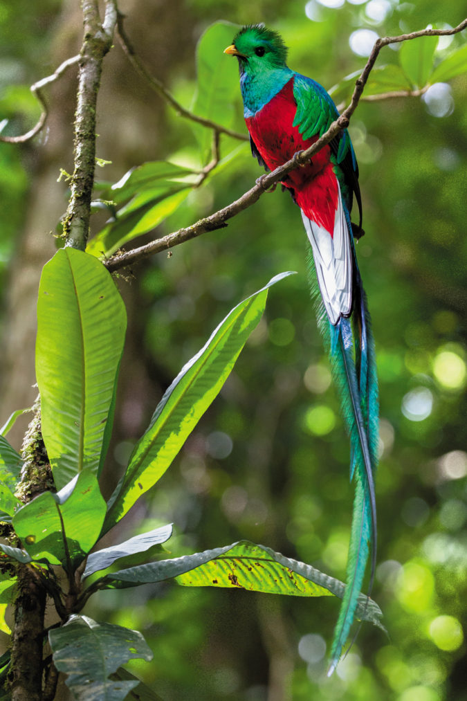 Resplendent-Quetzal-675x1013 Top 20 Most Beautiful Colorful Birds in The World