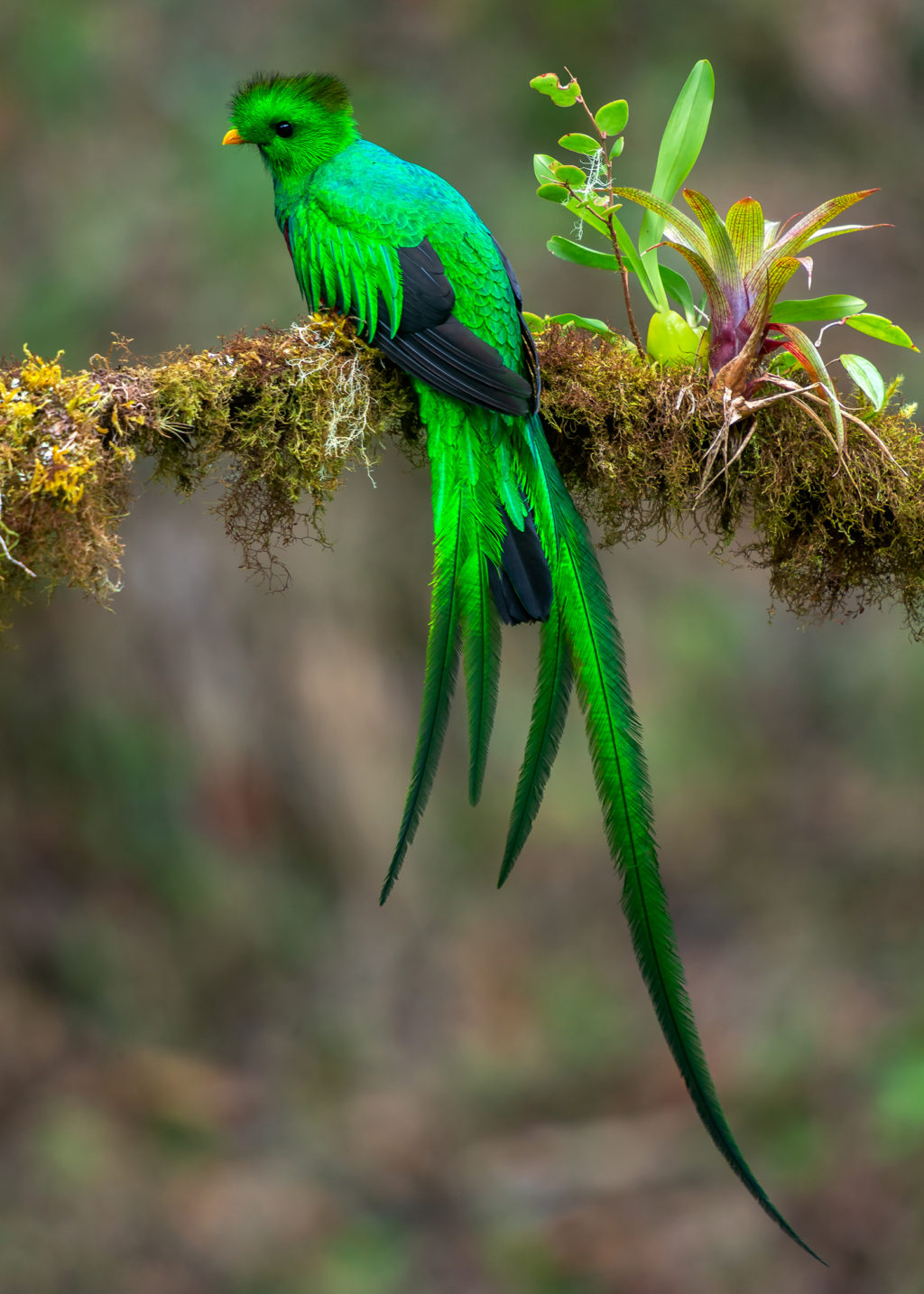 Resplendent-Quetzal..-1024x1433 Top 20 Most Beautiful Colorful Birds in The World