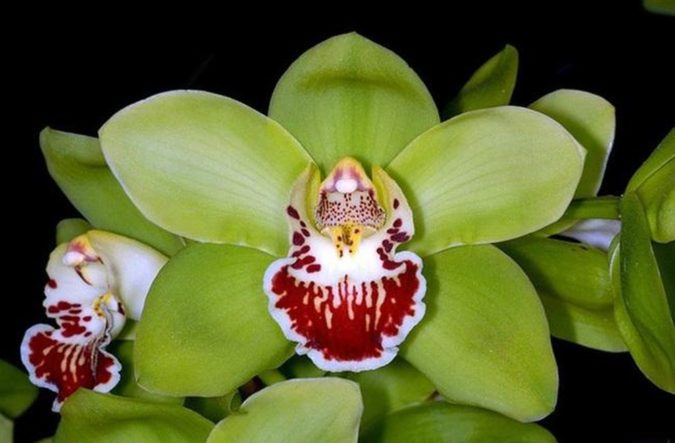 Shenzhen-Nongke-Orchid-675x443 Top 10 Most Expensive Flowers in The World