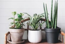 Photo of Why Houseplants Are This Year's Best Birthday Gifts