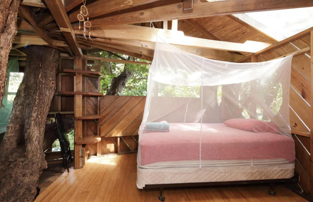 Tree-House-in-Florida.-1 Top 25 Strangest Houses around the World