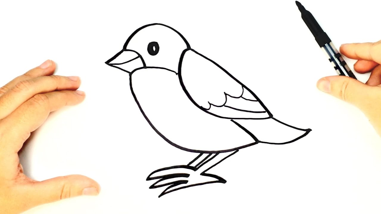 Bird Top 10 Easiest Things to Draw