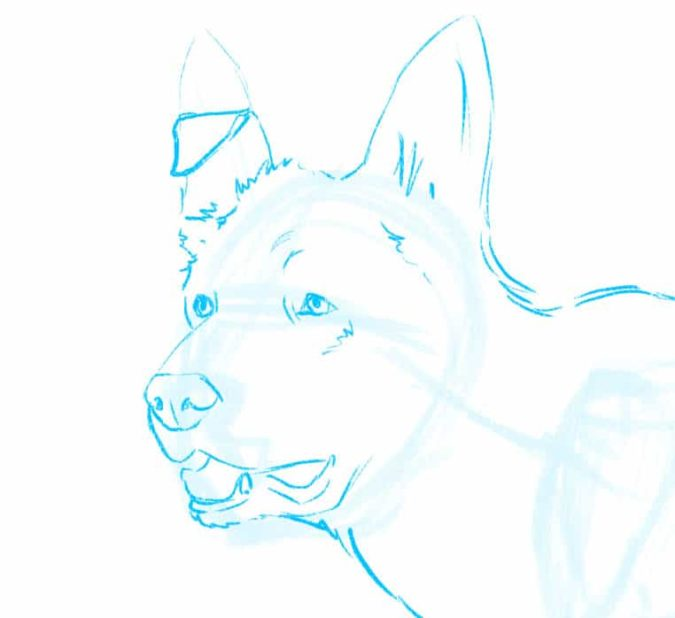 Focus-on-the-face-675x618 7 Tips to Draw Cute Animals