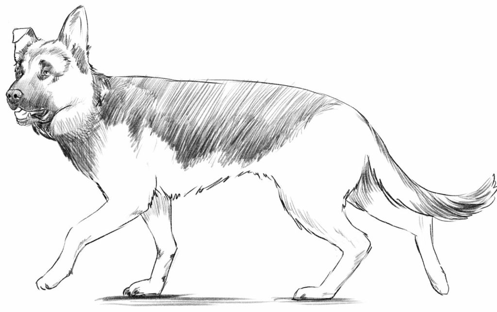 drawing-a-dog-1024x643 7 Tips to Draw Cute Animals