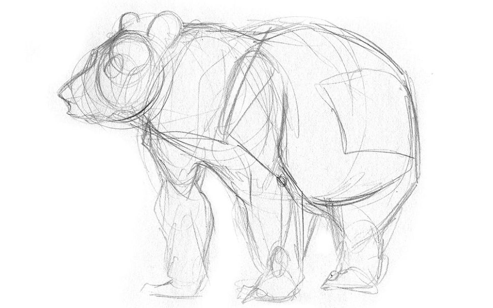 sketch 7 Tips to Draw Cute Animals