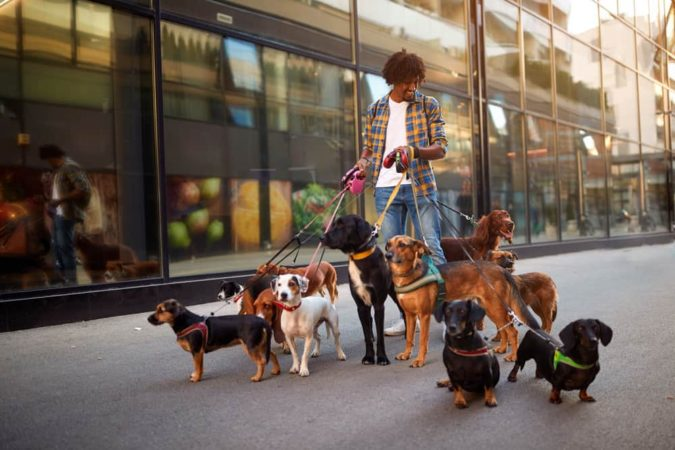 student-jobs-Dog-Walker-675x450 Most 7 Suitable Jobs for Students