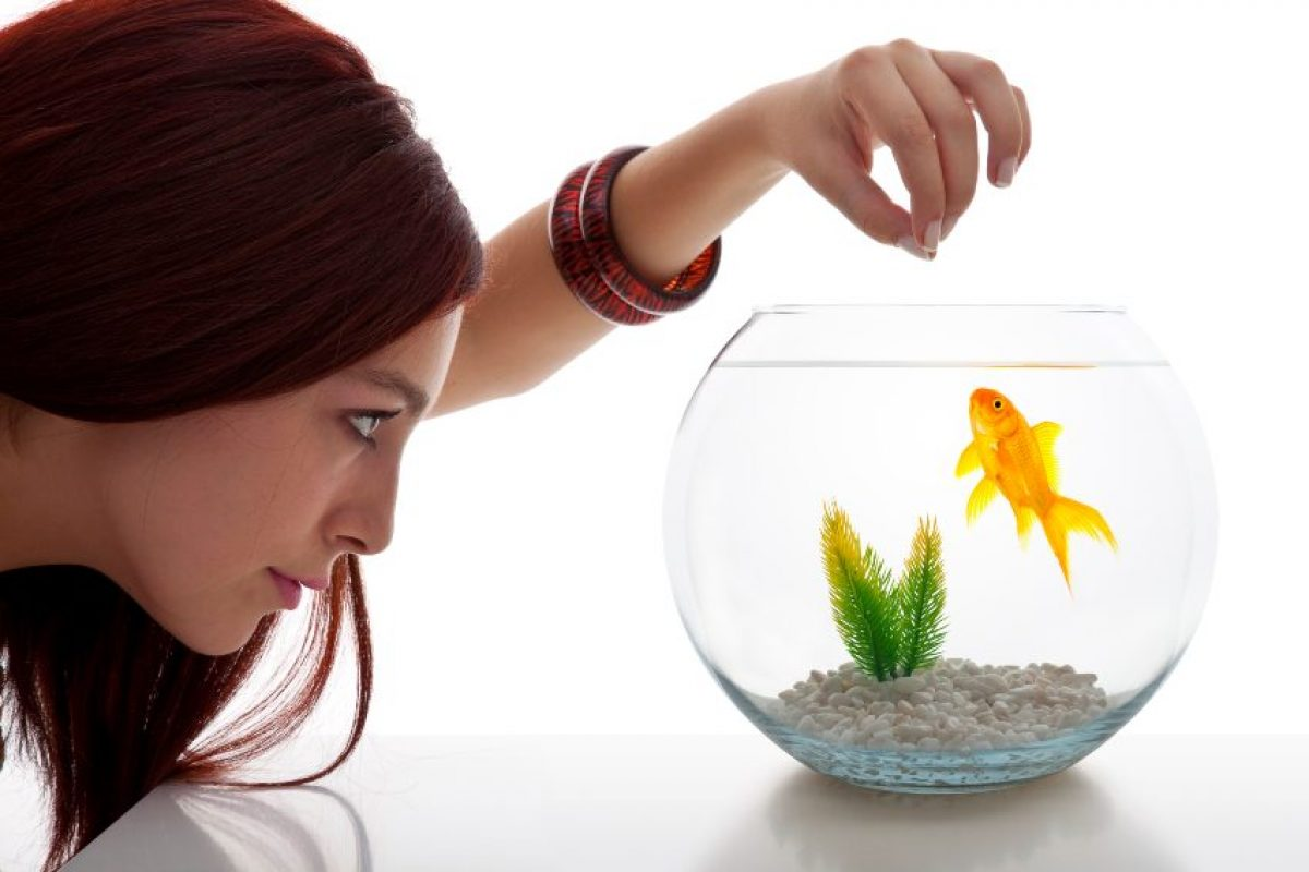 Fishbowl Best 6 Christmas Gift Ideas for Teenagers
