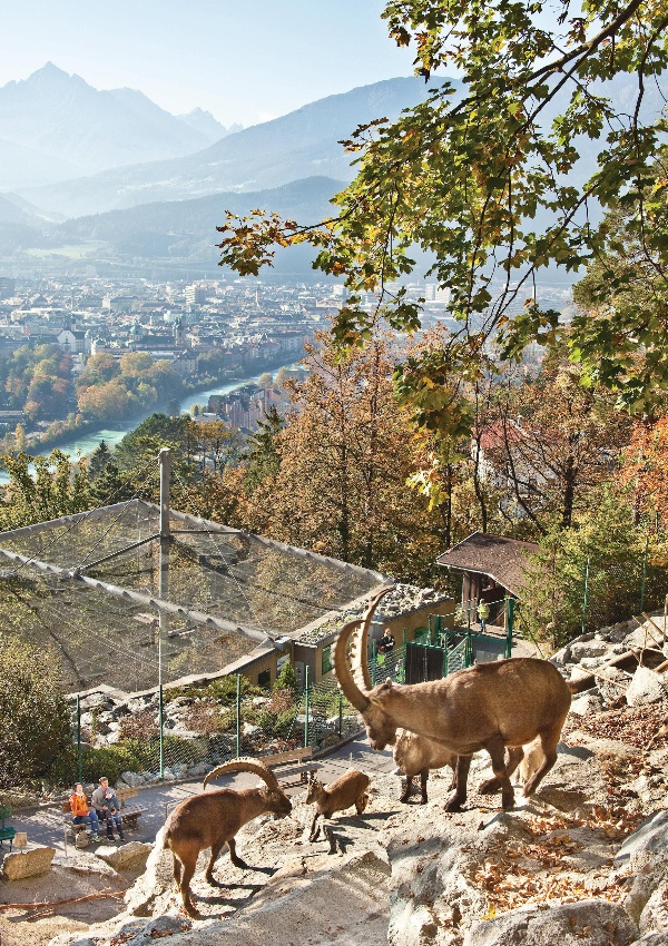 Alpenzoo-innsbruck-3 Top 10 Unforgettable Innsbruck Attractions to Visit in Summer