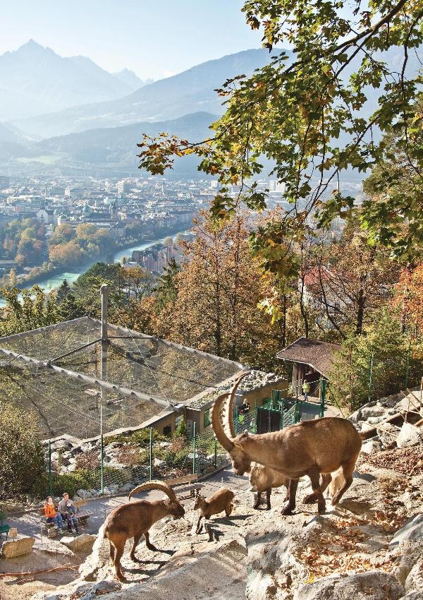 Alpenzoo-innsbruck-3 Top 10 Unforgettable Innsbruck Attractions to Visit in Summer