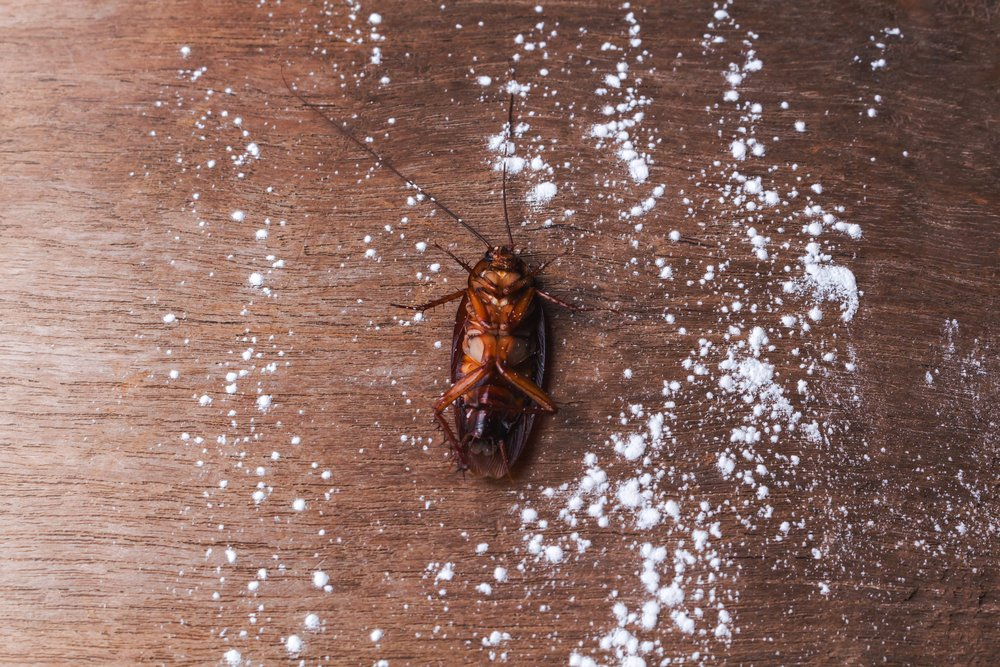Get-rid-of-cockroaches-by-using-borax 10 DIY Hacks to Get Rid of Pests in Your Garden Shed