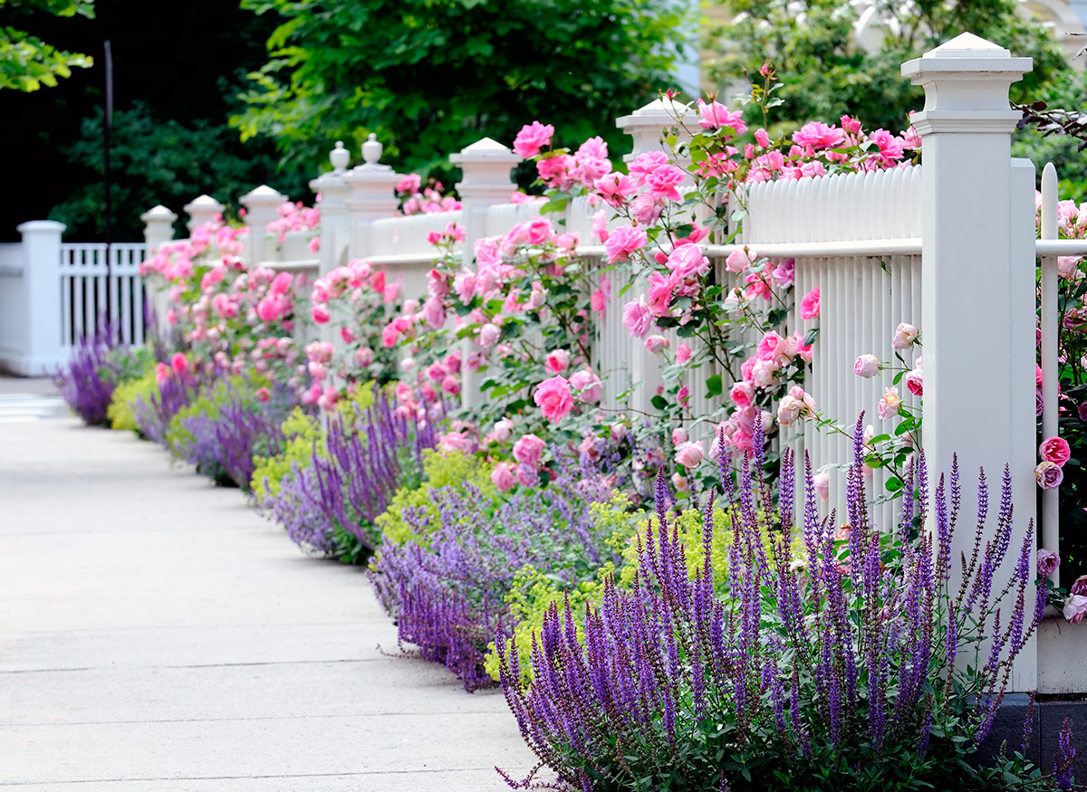 hedges-fences-or-boundary-walls-1 100+ Surprising Garden Design Ideas You Should Not Miss in 2021